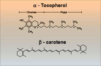 Diagrams of Alpha-Tocopherol and Beta-Carotene structures